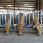 Das Sicherheitsfressgitter Jourdain Safety bietet den Tieren einen optimalen Zugang zum Raufutter.